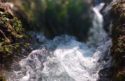 Bois l'eau et nourris la paix