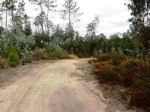 Retour au milieu des eucalyptus.