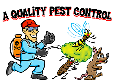 Should you use heat treatment for pest control in Vancouver?