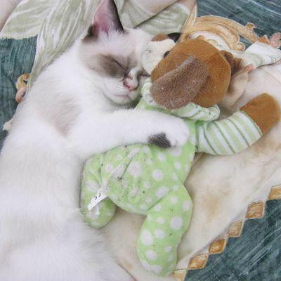 EL gato, The cat, Le chat, we love it