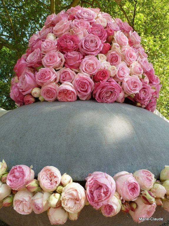 des roses en composition,