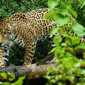 Mexiko: Wir verteidigen unseren Regenwald