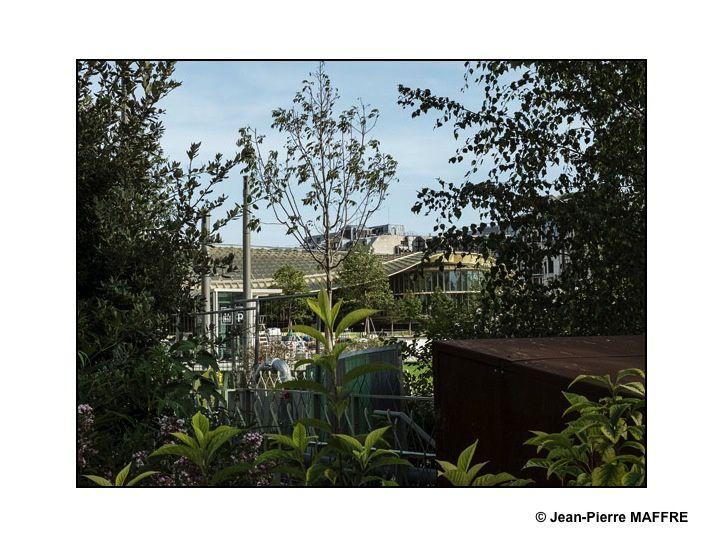La canopée terminée, son jardin commence à prendre forme.
