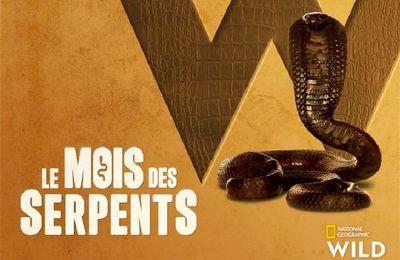 Les serpents sont à l'honneur en mars sur National Geographic Wild