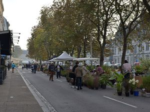 De retour du marché d'automne de Quimper