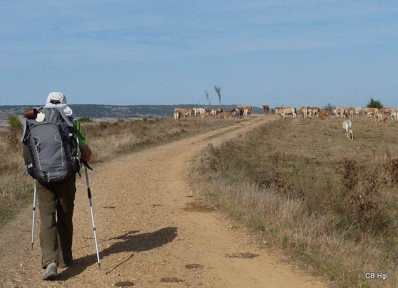Notre chemin de Puente-la-Reina jusqu'à Santiago, puis Fisterra et Muxia à l'automne 2011