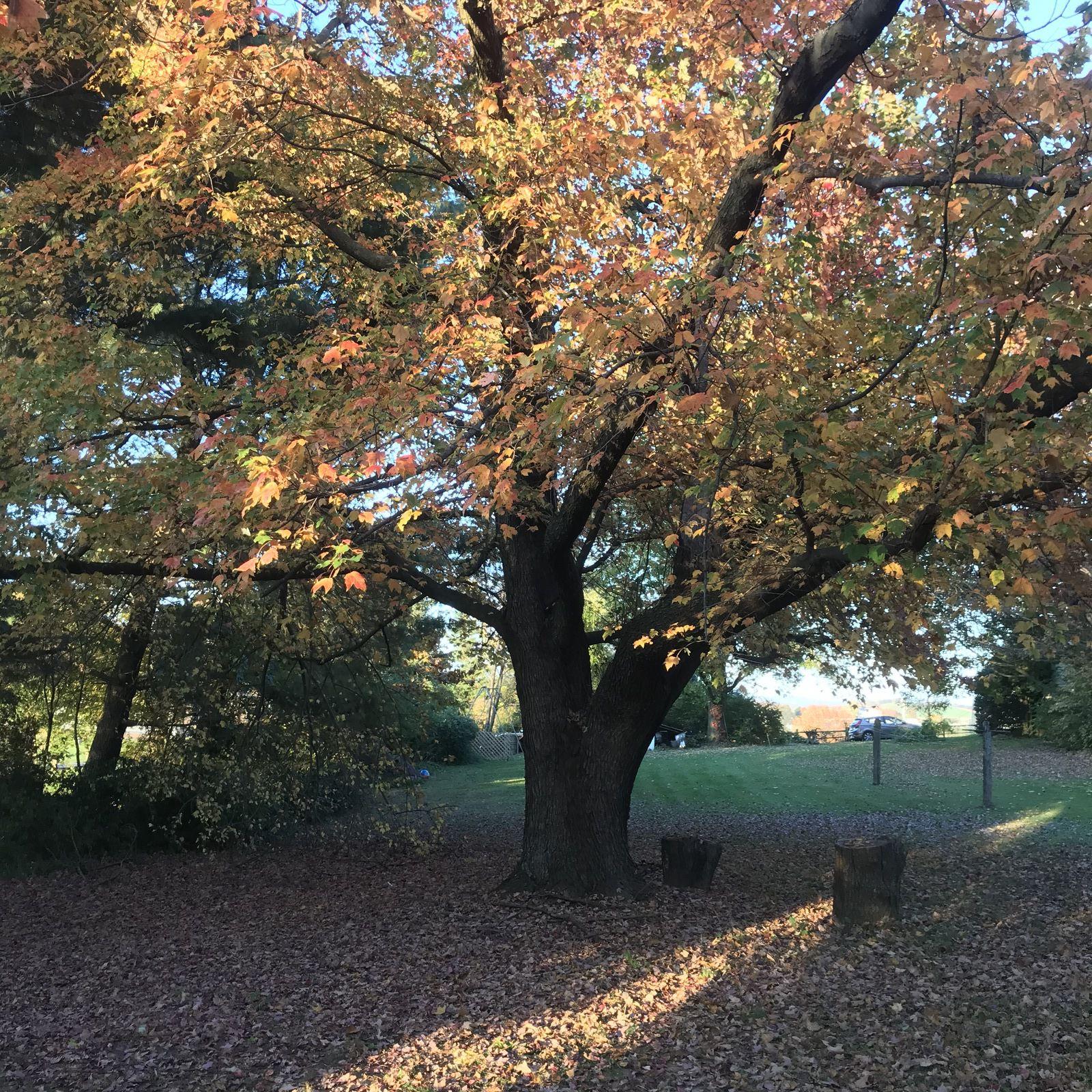 L'automne est presque fini! Bientôt plus de feuilles!