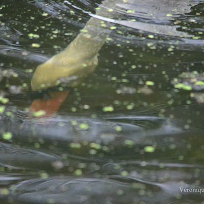 La photo du dimanche : Plongeon !