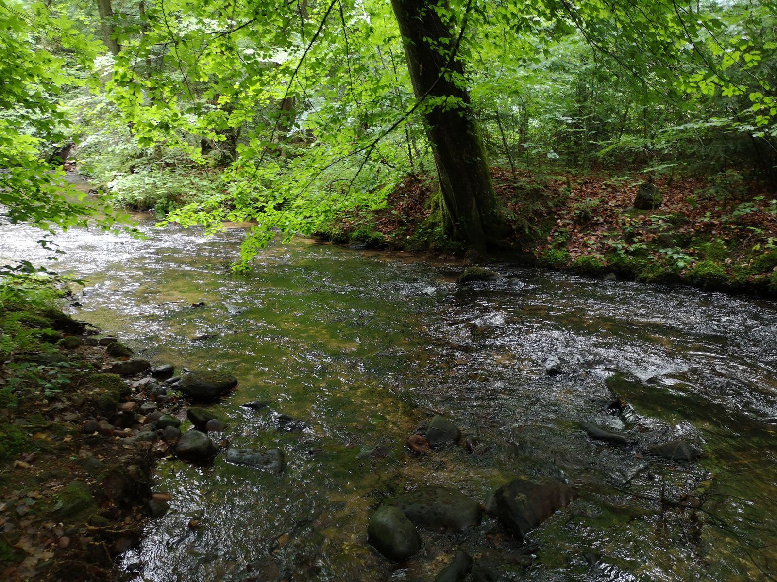 Et sous la cascade, la Mossig coule paisiblement vers le Fuchsloch et Romanswiller, avant de rejoindre Wasselonne et quelques kilomètres plus loin, la Bruche.