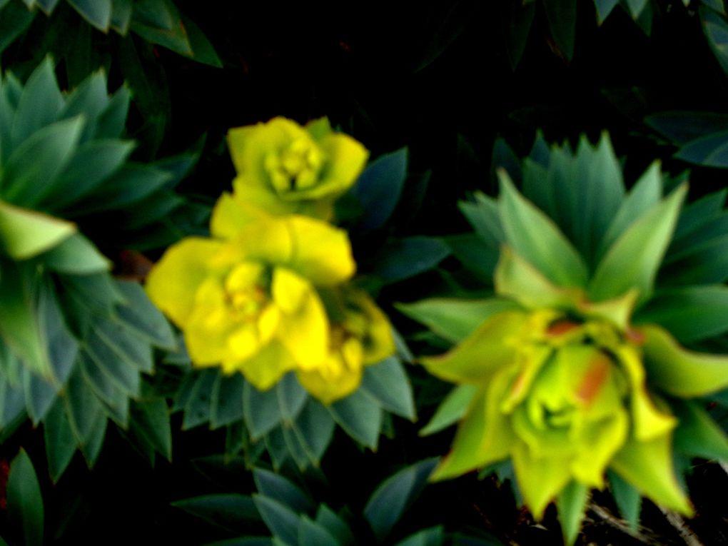 Romarins à l'odeur amère, euphorbes, buisson de presles, roses précoces et tapis de pâquerettes....