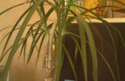 Plantes d'intérieur chez Oufette41
