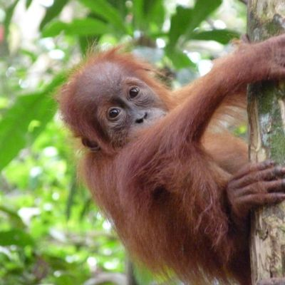 Indonésie : de Medan à Bukit Lawang