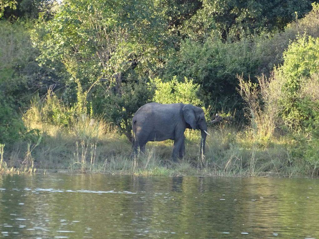Jour 10: Au Zimbabwe