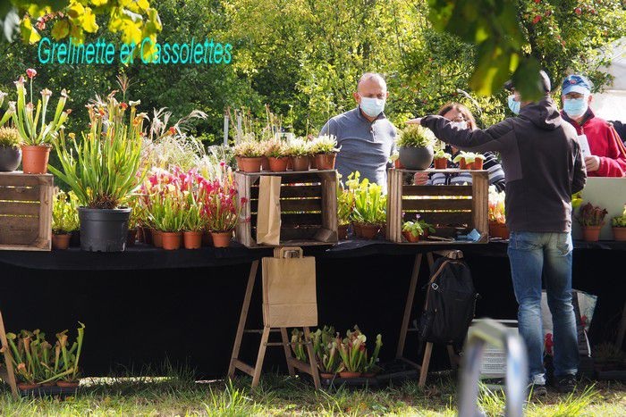 Journées des Plantes et Art du Jardin les 3 et 4 octobre à Jossigny, c'est maintenant !