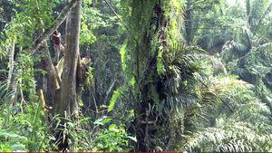 Parc national de Kahuzi-Biega