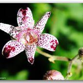 L'étoile du jardin - Images du Beau du Monde