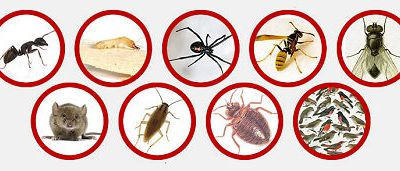 Why Hire Pest or Rodent Control Services for Home?