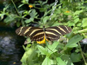 Les superbes papillons de Mainau, l'île aux fleurs et mille beautés ...