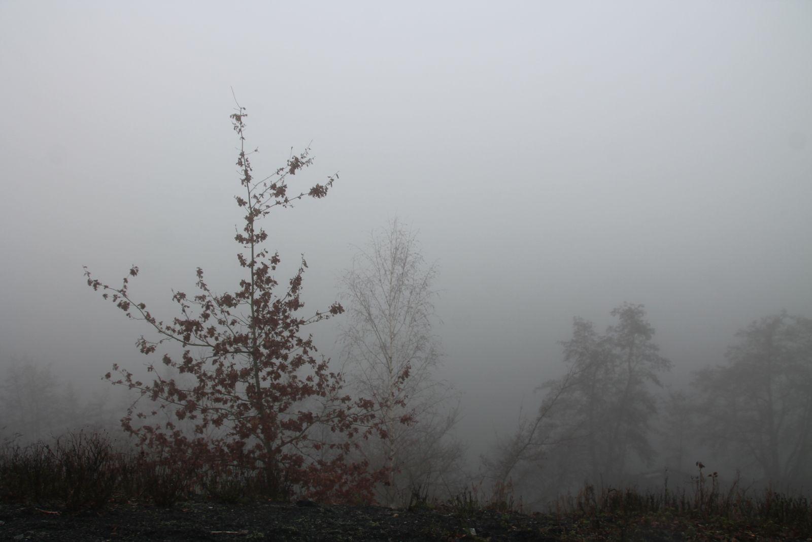 Petit salé aux lentilles - balade dans le brouillard