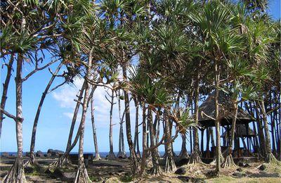 Un voyage à la Réunion ?