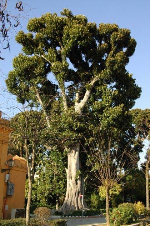 En Espagne. Jardins de Murillon sont des anciens potagers d'Alcazar qui furent récupérés par la ville en 1911.C'est un charmant jardin où les Sévillans aiment à se retrouver ...