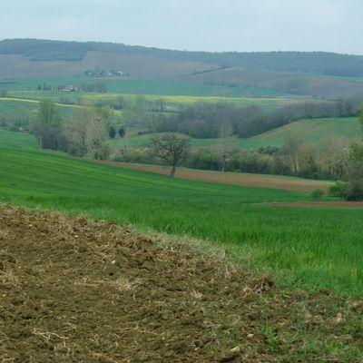 Paysage à la campagne