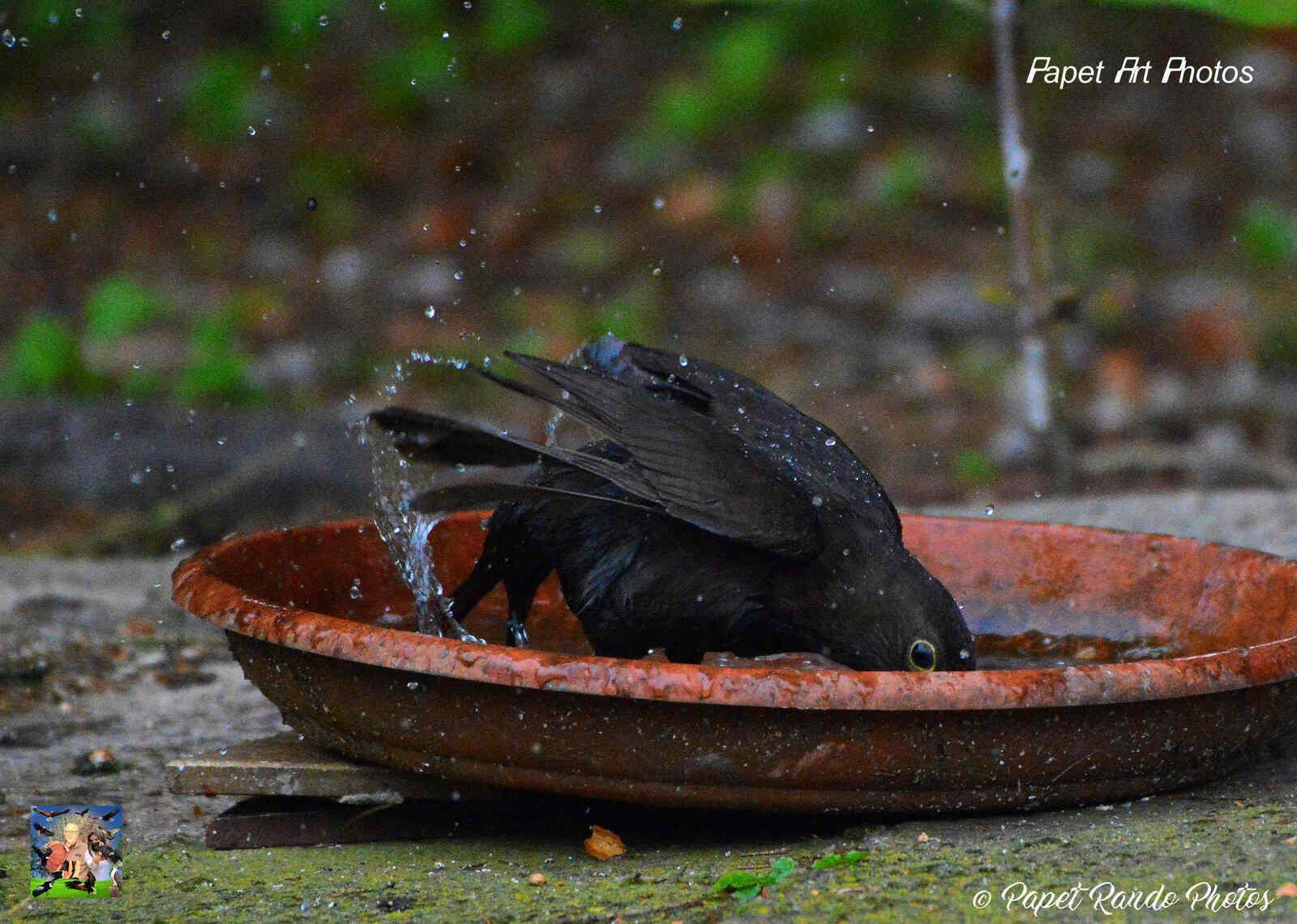 Aujourd'hui le bain, en plus sur une pluie battante