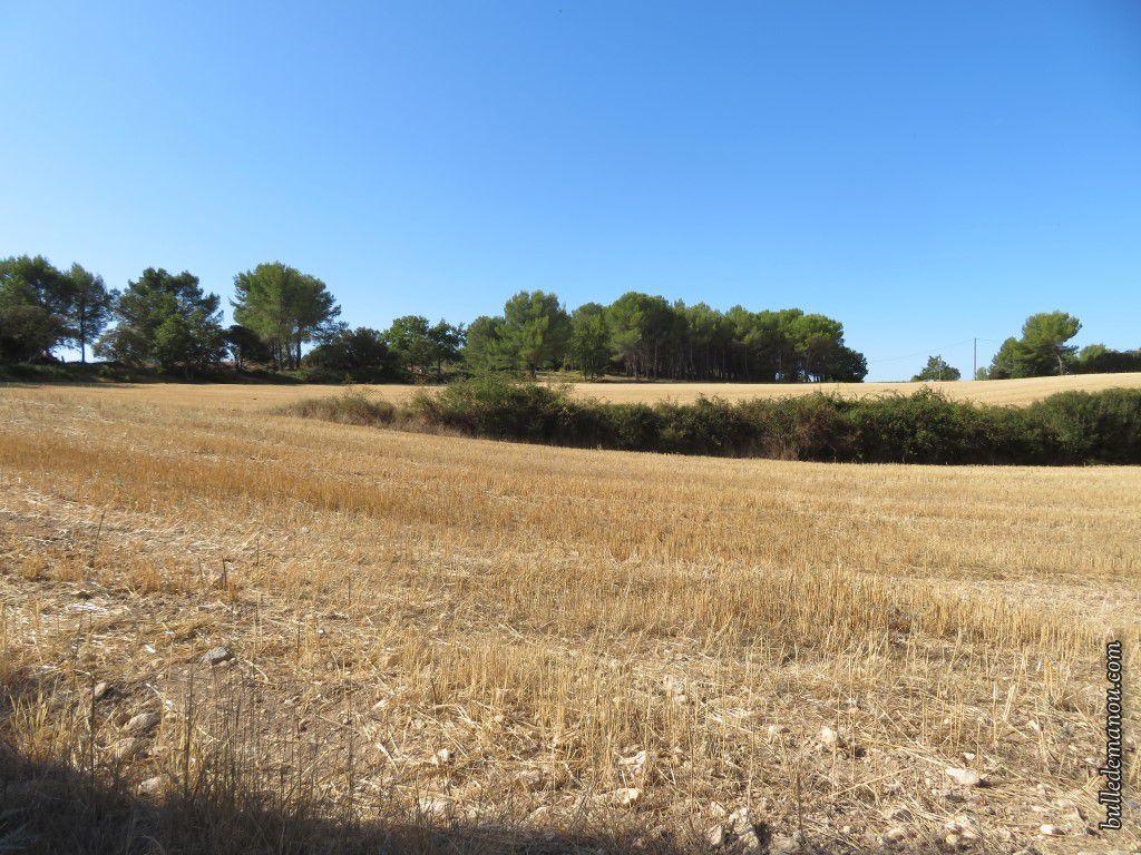 Des champs cultivés