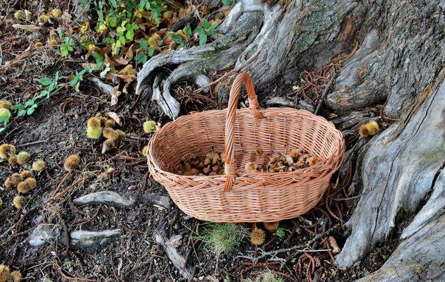 Cueillette d'automne...