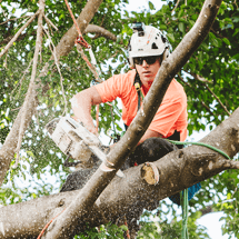 Multiple Benefits of Professional Tree Lopping Services in Wishart