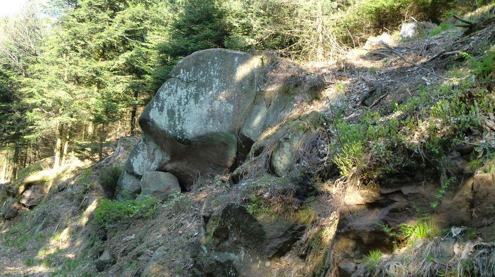 C'est bien la tête d'un éléphant allongé que je crois reconnaître là!!!