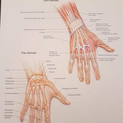 #Anatomie #main #pathologie #Hand
