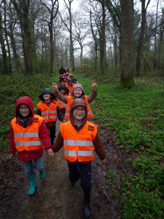 Les élèves en forêt puis la primevère, la stellaire holostée et l'anémone sylvie.