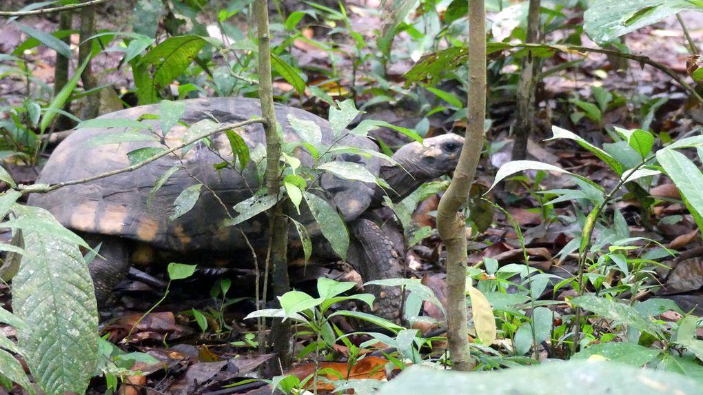 En Amazonie chez les Quechuas.