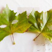 Jolies feuilles d'automne... - Béabidouilles...