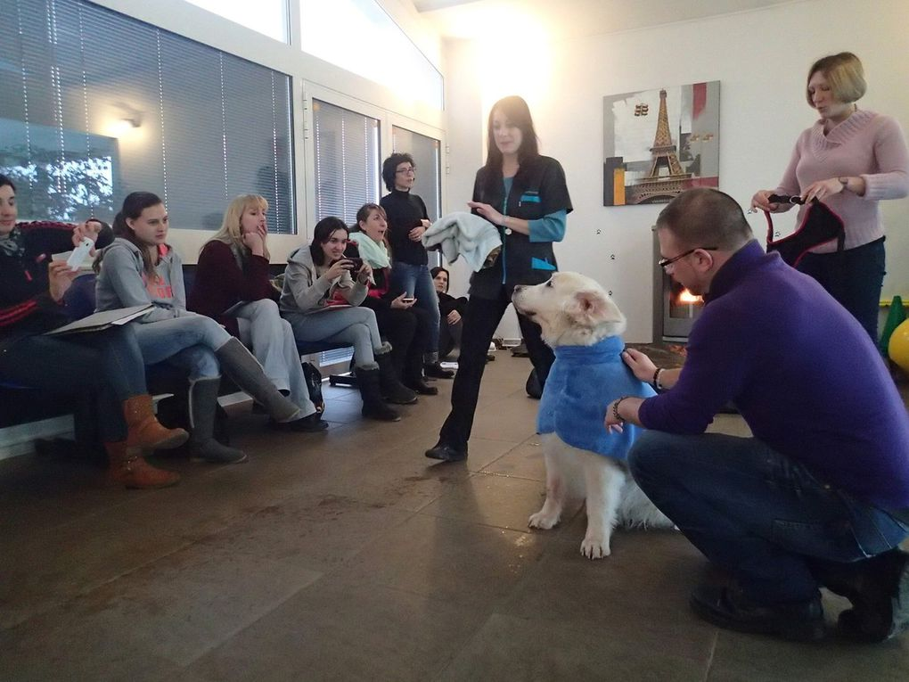 FORMATION HYDROTHERAPIE DESTINEE AUX ASSISTANTES VETERINAIRES