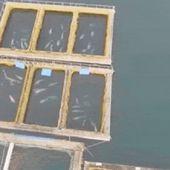 """Une """" prison à baleines """" découverte en Russie témoigne de la réalité du commerce illégal des cétacés"""