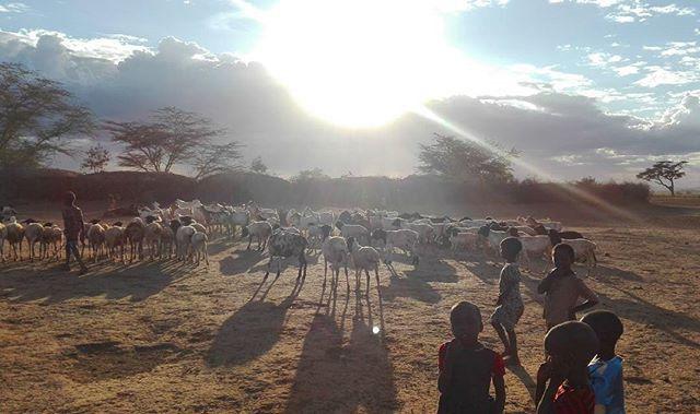 De l'aide pour les Maasai ... Help for Maasai People ...
