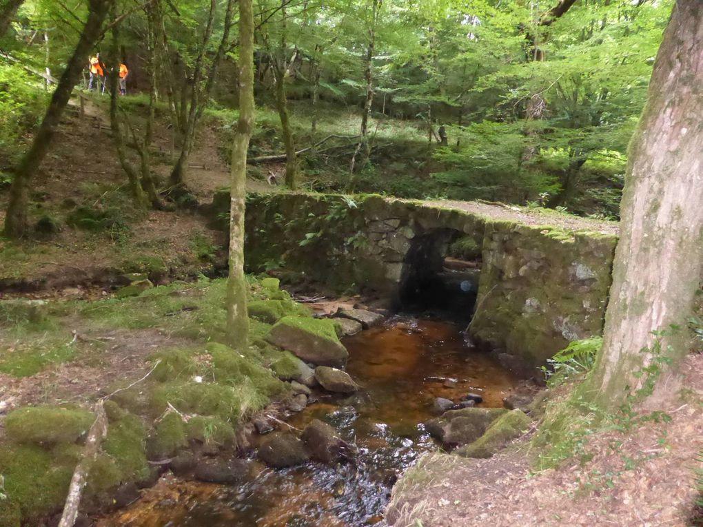 Nous sommes bien au frais le long de ce petit ruisseau ombragé.