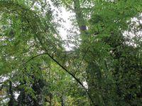 La sortie dans la Forêt de Bondy - CPA