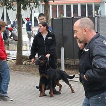 Champ-de-Mars d'Angoulème : Une surveillance (illégale?) par un maitre-chien d'une place publique ?