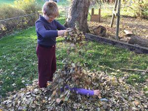joie d'automne: les premieres feuilles
