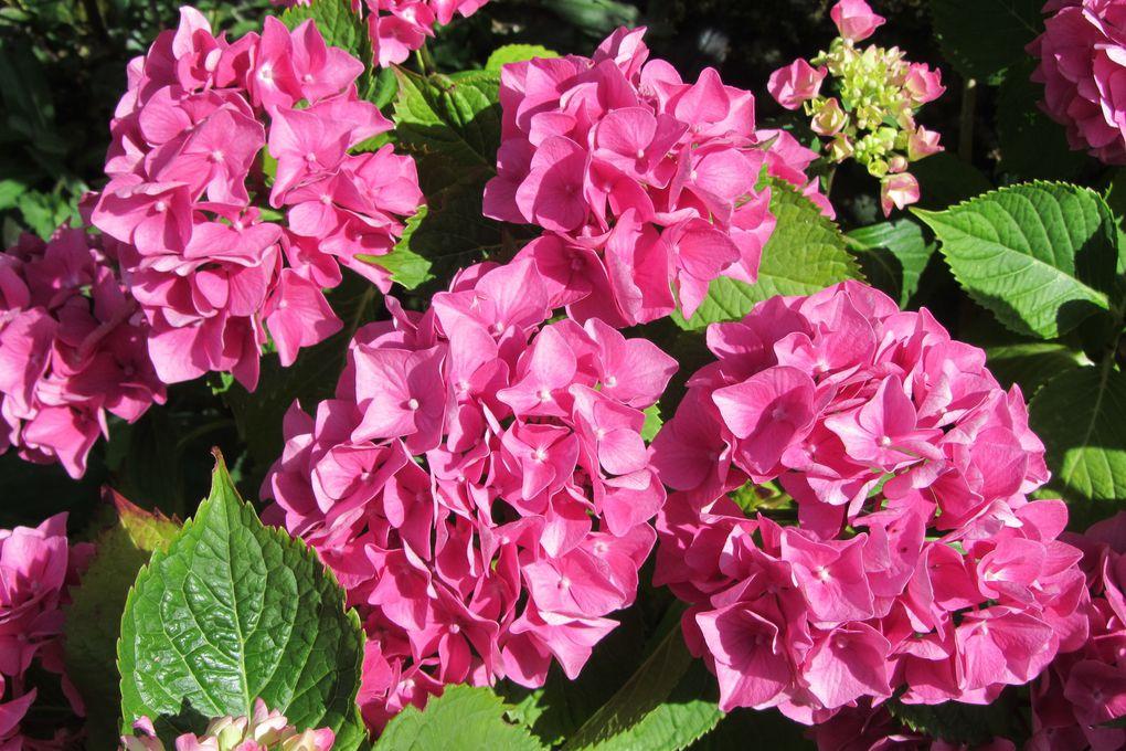 Au jardin, la vie en rose