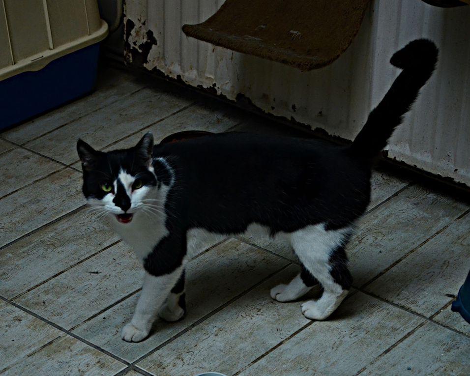 Sociable, très active et bavarde, cette chatte a besoin de présence. Comme tous nos chats, elle est stérilisée, vaccinée et pucée.