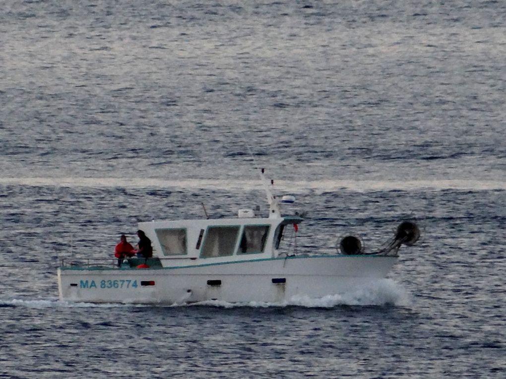LULE  MA836774 , en baie de Marseille le 19 juin 2018