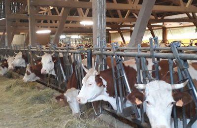 La Sarrazine: Une ferme biologique à Nans sous Sainte Anne... (2)