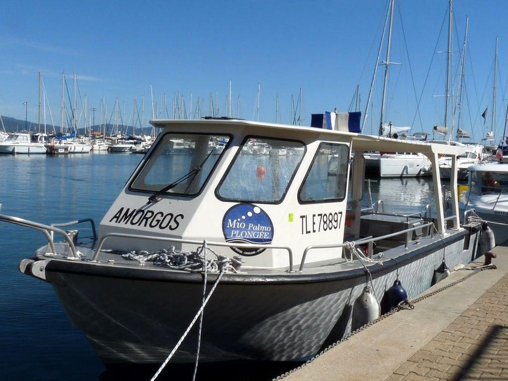 AMORGOS , vedette d'un club de plongée dans le port de Hyères
