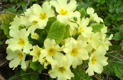 A Villeneuve sur Tarn: bientôt le printemps.
