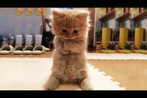 Vidéo chats chiens canetons à découvrir... so cute !
