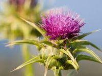 3 herbes essentielles pour votre bien-être (VIDÉO)